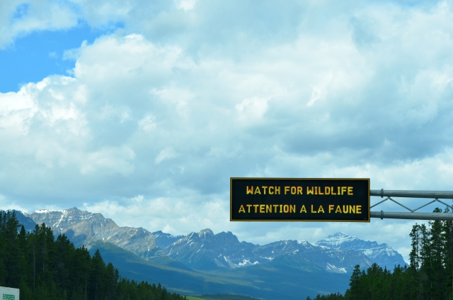 Saw tons of sign alerting us of wildlife...