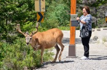 Taking a picture of the rear of an elk with an ipad?!?!