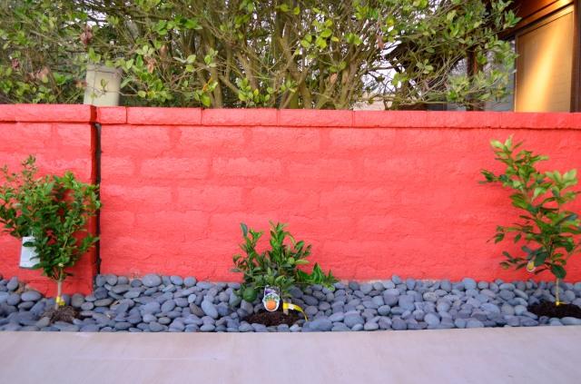 L-R: lime, blood red oranges, pomelo.