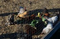 The chicken coop.
