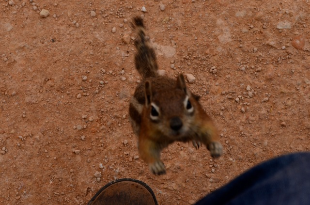 This bold chipmunk climbed up my leg as I was taking a picture of it.