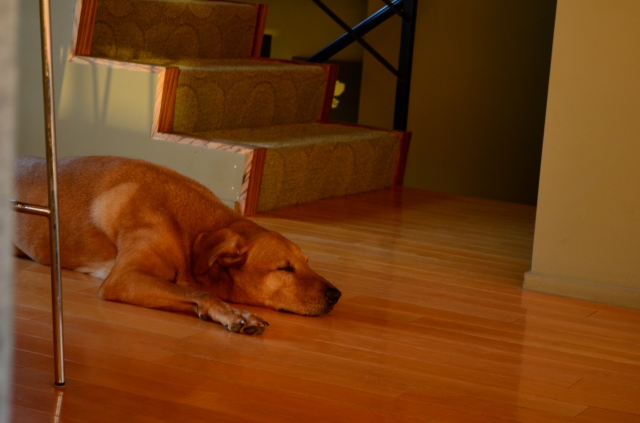 and a siesta.